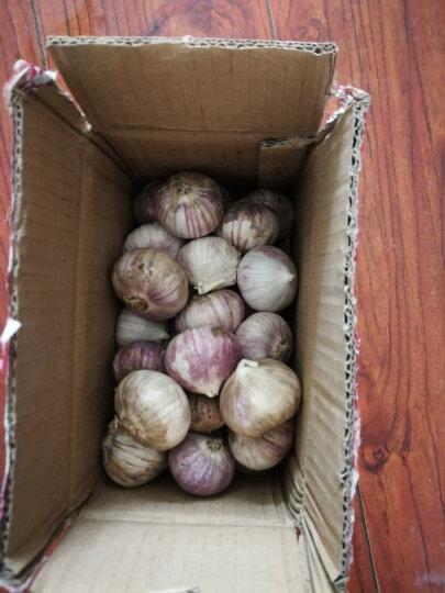 云南特产大理紫皮大蒜独头蒜 总重1000g装 干蒜头 晒单图