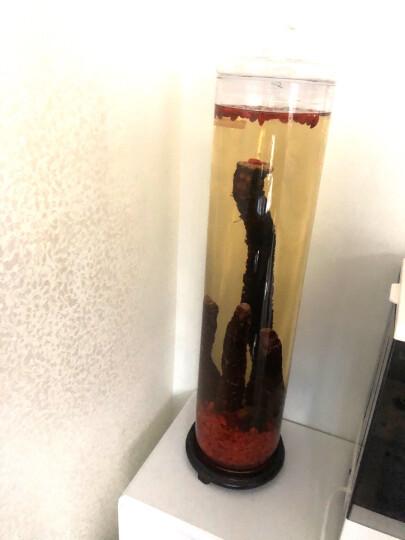 志方益直筒泡酒玻璃瓶子带龙头家用泡酒瓶无铅泡酒罐密封泡酒玻璃瓶酿酒罐酒桶 18斤装+底座 晒单图