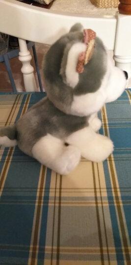 ZAK!毛绒玩具 创意可爱萌宠仿真小狗 儿童节礼物 抱枕玩偶布娃娃 宝迪狗20cm 晒单图