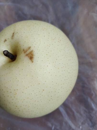 晋州长城 特级甜鸭梨 净重10斤新鲜水果 晒单图