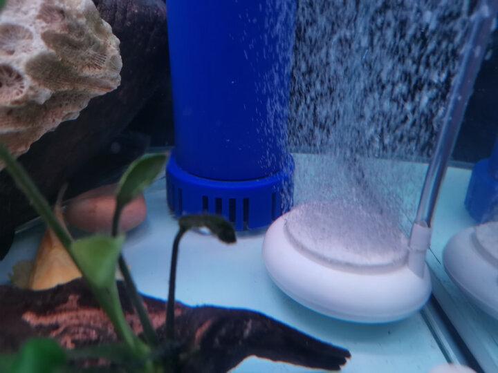 老渔匠鱼缸增氧泵充电交直流两用钓鱼氧气泵鱼缸打氧充氧机养鱼超静音锂电池停电自动切换 10W交直流气泵+炉烟S200气石套装 晒单图