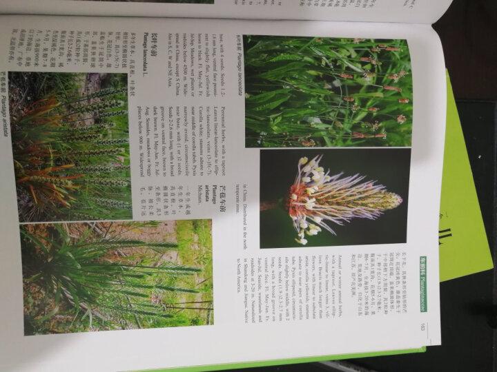 中国高等植物彩色图鉴  第七卷 被子植物 玄参科—菊科 晒单图