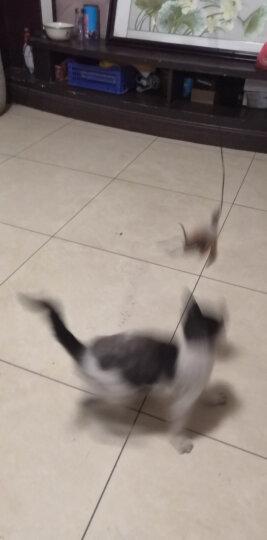 田田猫加长杆羽毛逗猫杆钓鱼逗猫棒猫玩具宠物猫用品送替换头 晒单图