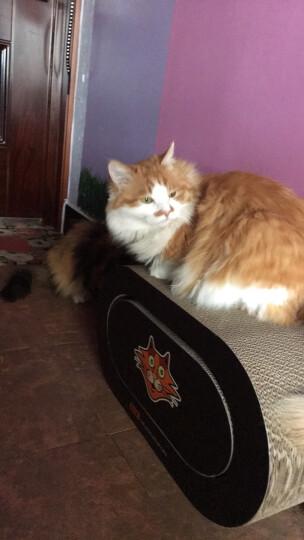 田田猫大型组合立式瓦楞纸肥猫猫抓板猫窝猫玩具猫咪用品送猫薄荷 晒单图