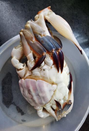 陆龙 呛蟹冷冻梭子蟹家宴红膏咸蟹 500g/2只/袋 大规格 舟山海鲜水产美食 顺丰速配 晒单图