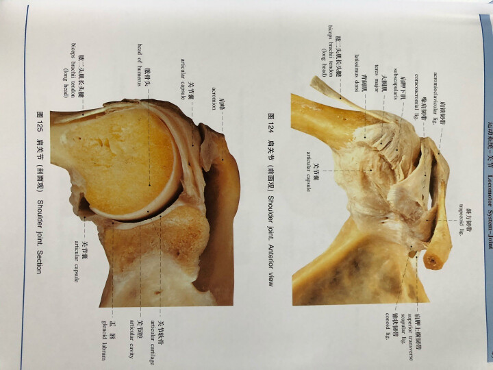 人体解剖学标本彩色图谱(第2版) 晒单图