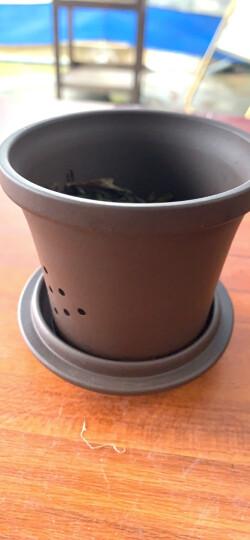 金镶玉 宜兴紫砂杯 茶杯水杯茶具办公杯带内胆过滤 荷塘月色±350ml 晒单图