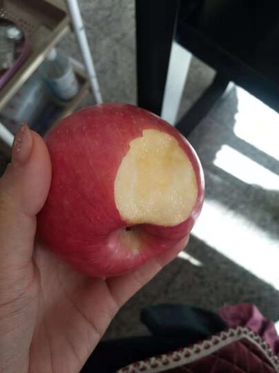 寻真 烟台栖霞红富士 苹果水果 10-25个 5kg 晒单图