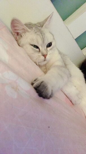 宠幸猫砂 蓝晶水晶猫砂1.75kg 大颗粒吸水非结团膨润土豆腐松木猫沙幼猫成猫硅胶砂 猫咪用品 晒单图