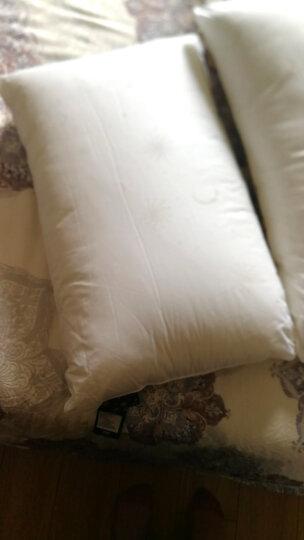 安睡宝(SOMERELLE)枕芯 科技纤维枕头 3D立体压花玉米纤维枕 单只装 48*74cm 晒单图