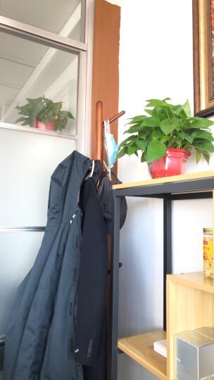 心家宜(SINGAYE) 欧式实木落地衣帽架 进口木创意挂衣架 加粗主杆多挂钩晾衣架 咖啡色98141C 晒单图