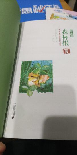 森林报系列(彩色版 套装全4册) 晒单图