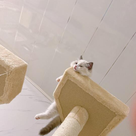 憨憨乐园 猫玩具剑麻球逗猫玩具 宠物玩具猫猫玩具 猫咪喜爱玩具磨爪玩具直径6.5cm颜色随机 晒单图