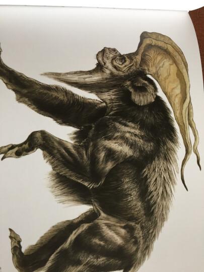 国际插画大师惠特拉奇的动物画教程:艺用生物解剖 晒单图