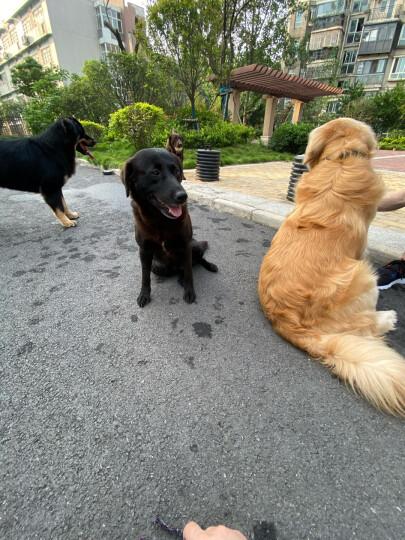 卫仕 宠物乳钙片400片 狗狗钙片泰迪金毛幼犬钙粉大型犬健骨补钙 晒单图