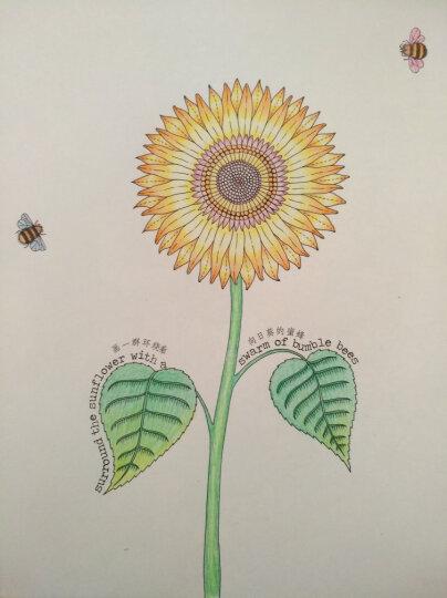 秘密花园:一本探索奇境的手绘涂色书(散页版) 晒单图