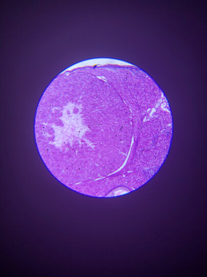 萨伽(SAGA)儿童中学生生物电子显微镜1600倍高倍高清便携专业科普套装可接电脑水产养殖看精 套餐3=标配+延长筒+卡口(可接单反拍摄) 晒单图
