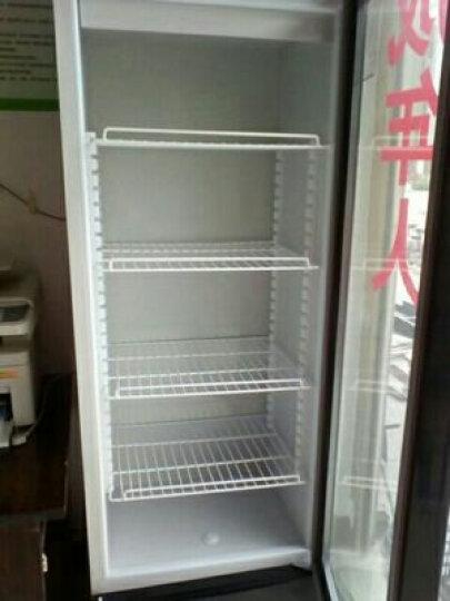 格盾(gedun)饮料柜立柜商用冰箱展示柜冷藏柜冰柜啤酒饮品保鲜柜 【自然绿双门】 直冷 晒单图