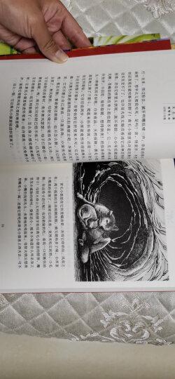 动物小说大王沈石溪守望生命书系 罪马英雄 晒单图