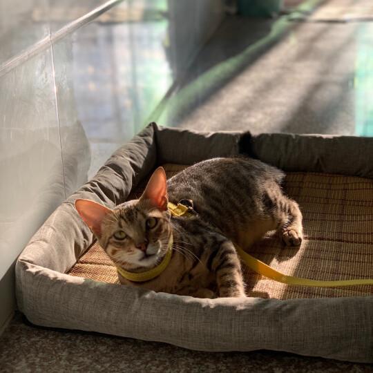美滋元幼猫粮 深海鳕鱼味2.5kg幼猫猫粮5斤 幼猫粮5斤 晒单图