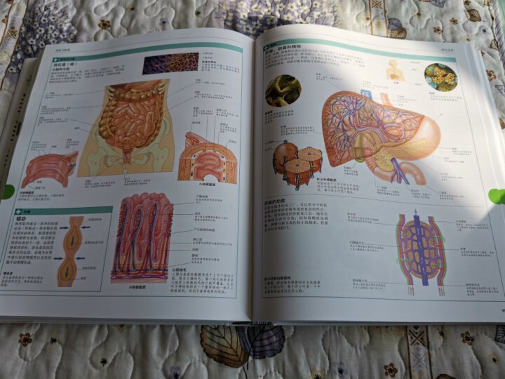 DK宝宝游戏与能力训练百科全书 晒单图