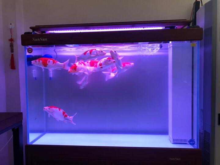 NaturalColor鱼缸专用过滤水族箱过滤材料 吸氨石 8-12mm NC-62 500g 晒单图