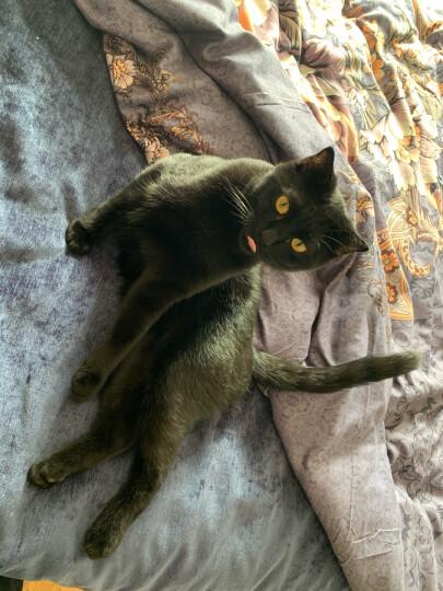 伟嘉猫粮 宠物猫零食 猫湿粮 软包猫罐头 大龄猫全价妙鲜包 海洋鱼味85g*12整盒装 晒单图