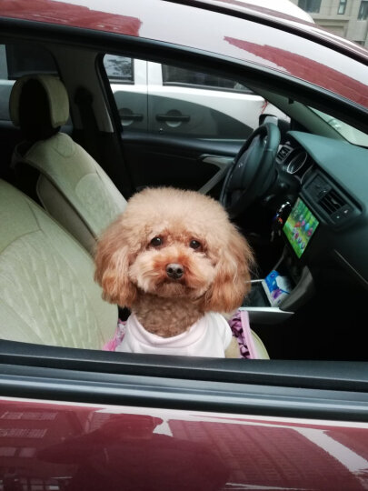 伯纳天纯 (Pure&Natural)宠物狗粮 泰迪/贵宾奶糕狗粮 3周离乳幼犬、孕育、哺乳期母犬1.5kg 经典系列 晒单图
