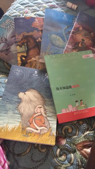 黑鹤动物小说系列:狼谷炊烟 晒单图