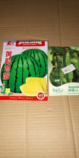 水果种子 黄瓤西瓜种子 礼品西瓜种子 黄心西瓜种子 一代杂交种 花皮黄肉西瓜种子 30粒/包 晒单图