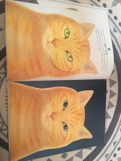 信谊绘本世界精选图画书:动物眼中的世界 晒单图