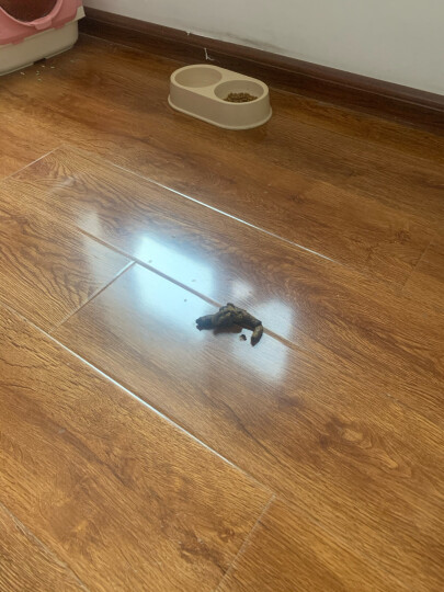 宠幸(CHOWSING) 猫砂  松木猫砂 2kg 猫咪用品吸水非结团膨润土豆腐水晶猫沙4.4L 晒单图