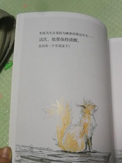松鼠先生和月亮 海豚绘本花园平装 儿童绘本3-6岁经典畅销图书 晒单图