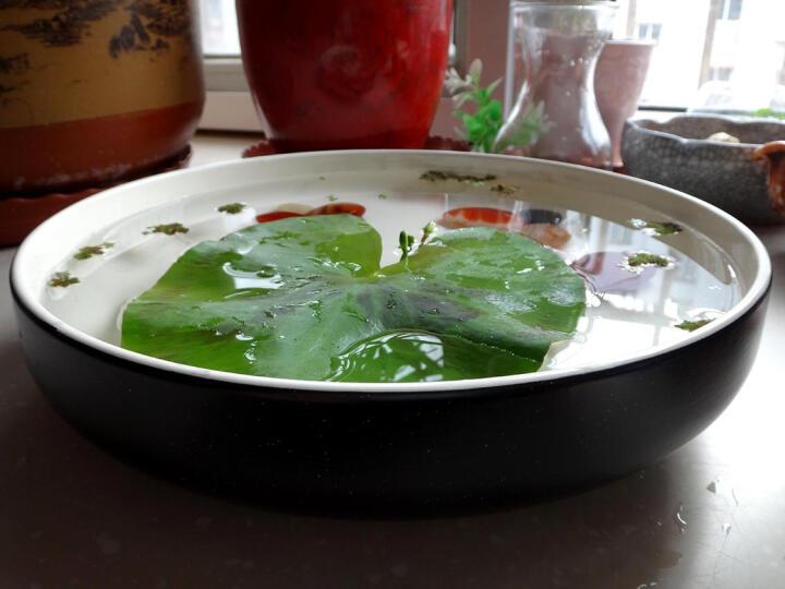 亿嘉IJARL 剑林创意日韩欧式陶瓷器家用圆盘深汤盘子10英寸菜盘大盘子 北欧印象 黑色 晒单图