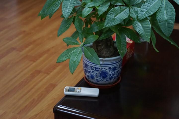 索尼(SONY)SD卡 高速存储卡 用于佳能单反索尼微单相机内存卡 32G 90M/s 高速闪存卡 晒单图
