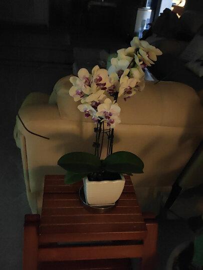 诺顿伯格全实木折叠多功能楼梯凳现代简约北欧家用创意两用梯椅木梯子阶梯凳橱房凳美式梯凳 蜜糖色 晒单图