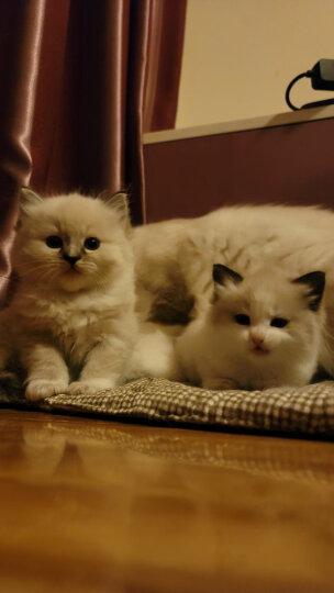 玫斯(metz) 猫粮英短美短成猫幼猫奶糕天然猫粮 幼猫粮3LB/1.36kg 晒单图