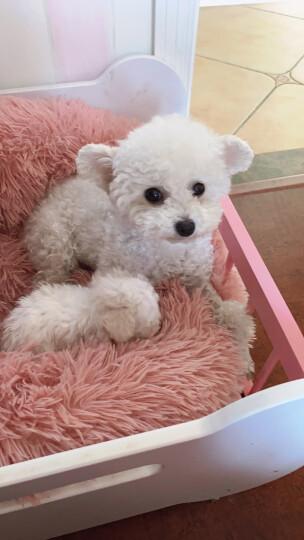 ROYAL CANIN 皇家狗粮 MIS30小型犬奶糕 幼犬狗粮 2月龄以下 全价粮 3kg 断奶离乳期 怀孕及哺乳期母犬 晒单图