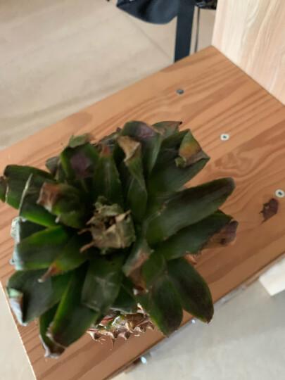 菲律宾菠萝 中果2个装 单果约1kg起 新鲜水果 晒单图