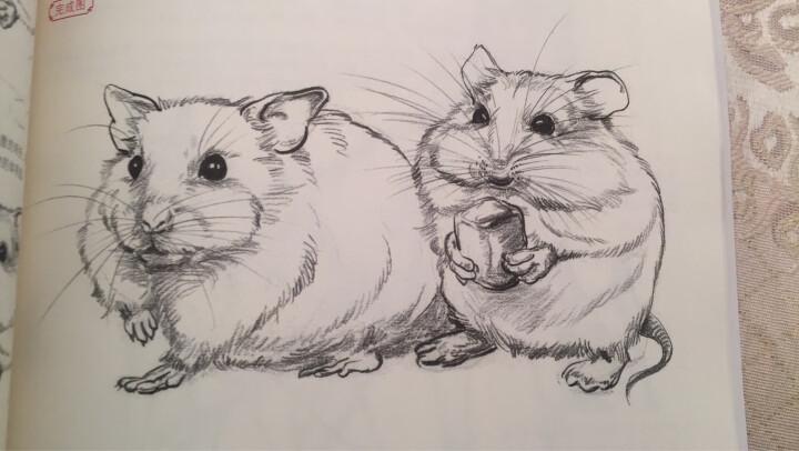 《兴趣学速写》入门自学零基础铅笔素描动物风景花卉画书籍专业技法手绘训练画画本临摹范本美术写生初 晒单图