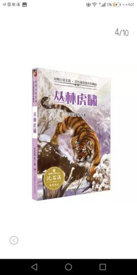 动物小说大王沈石溪 奇幻书系:蛮雄蜣螂 晒单图