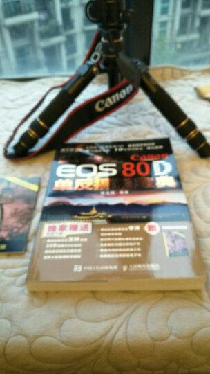 蜂鸟摄影学院Canon EOS 80D单反摄影宝典 晒单图