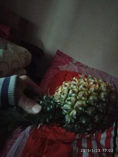 常枫 云南西双版纳菠萝 小菠萝甜菠萝净重5斤装 晒单图
