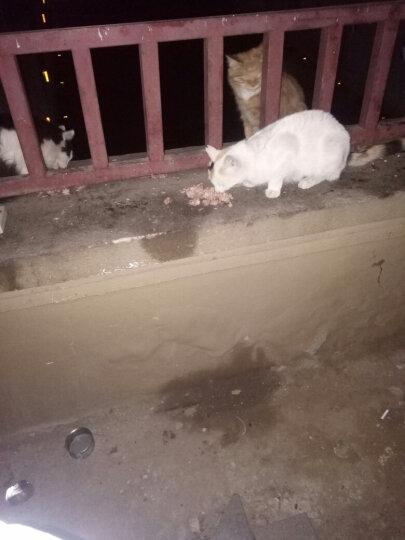 奥菲特猫粮20斤宠物成猫幼猫加菲猫狸花猫家猫野猫大猫小猫波斯猫宠物猫咪波斯猫通用10kg干粮包邮 晒单图