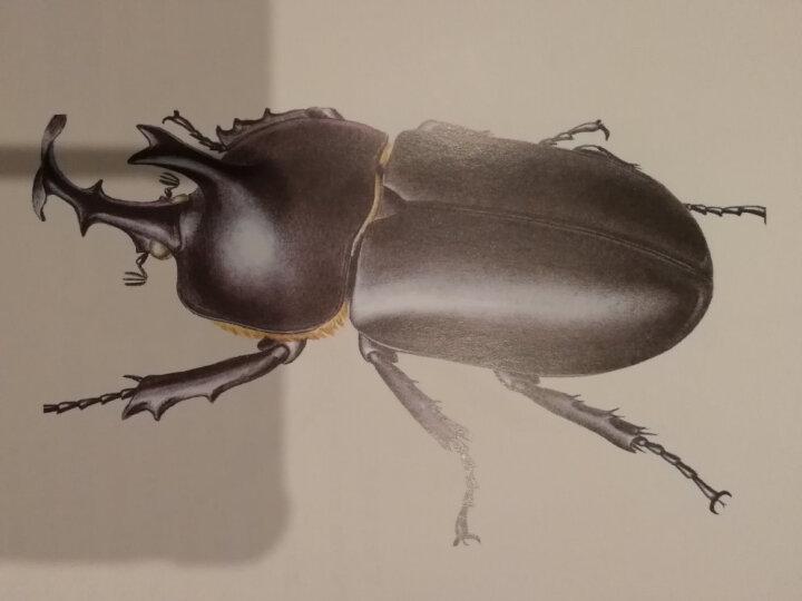 中国观赏甲虫图鉴 晒单图