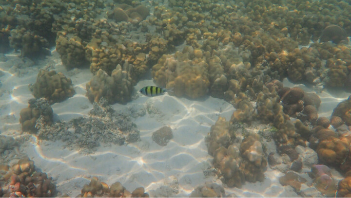 奥林巴斯(OLYMPUS)TG-5多功能运动相机 防水防震防尘数码tg5照相机 微距潜水 户外旅游 4K视频 卡片机 晒单图