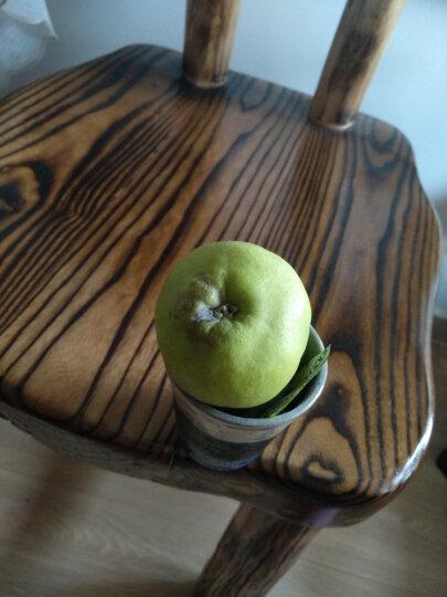 原泽味 新疆库尔勒香梨 750g 新鲜梨子水果 晒单图