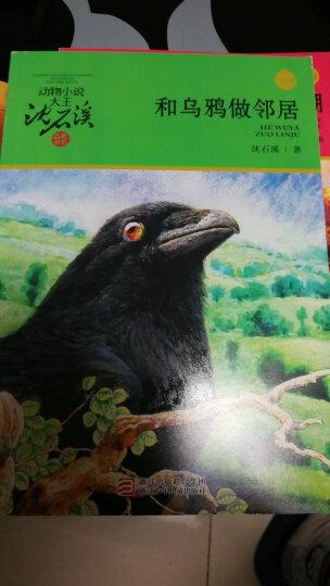 沈石溪激情动物小说  黑天鹅紫水晶 晒单图