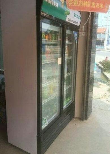 格盾(gedun)饮料柜立柜商用冰箱展示柜冷藏柜冰柜啤酒饮品保鲜柜 【洁净白双门】 直冷 晒单图
