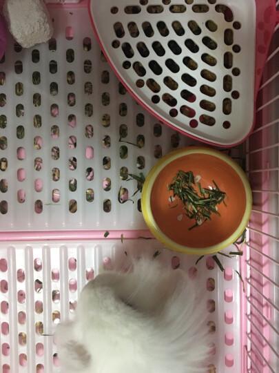 Jolly兔子水果干蔬菜干零食龙猫仓鼠荷兰猪零食 小宠小食小吃 奇异果加葡萄干 220克 JP129 晒单图